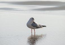 Чайка моет вверх в море Стоковое Фото