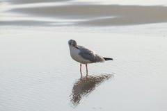 Чайка моет вверх в море Стоковое фото RF