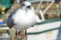Чайка морем Стоковое фото RF