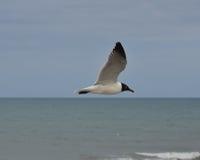 Чайка моря витая над Атлантическим океаном Стоковое Изображение RF