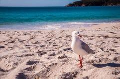 Чайка моря на пляже Стоковое Изображение RF