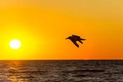 Чайка моря Солнця Стоковые Фотографии RF