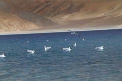 Чайка моря Стоковые Фотографии RF