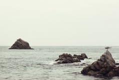 Чайка моря Стоковое Фото