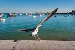 Чайка моря Стоковая Фотография RF