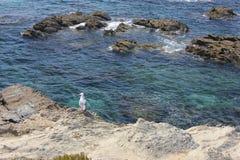 Чайка наблюдая море PJSR_A8404 стоковые изображения rf
