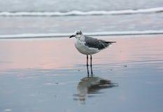Чайка на бечевнике океана стоковая фотография