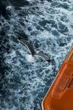 Чайка над водой стоковое изображение