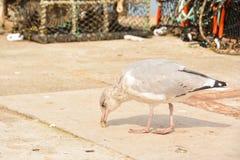 Чайка на гавани Стоковое Изображение