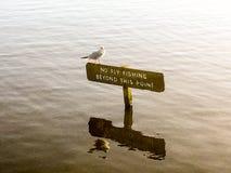 Чайка на знаке стоковая фотография rf