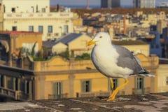 Чайка на крыше стоковая фотография rf