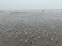 Чайка на море Таиланде Стоковые Изображения