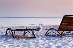 Чайка на море, Стоковое Изображение