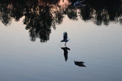 Чайка на охоте стоковая фотография