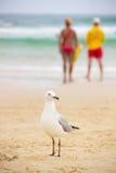 Чайка на песке на пляже Стоковые Изображения