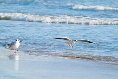 Чайка на пляже, голубое море Стоковое фото RF