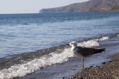Чайка на пляже Стоковые Изображения