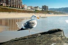 Чайка на пляже стоковое изображение rf
