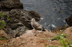 Чайка на побережье стоковые изображения rf