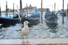 Чайка на портовом районе в Венеции Стоковая Фотография
