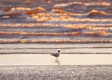 Чайка на предпосылке волн моря Стоковое Изображение