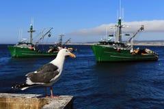 Чайка на пристани #3 Стоковая Фотография RF