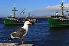 Чайка на пристани #2 Стоковые Изображения