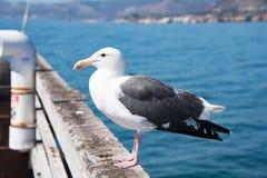 Чайка на пристани Стоковая Фотография