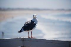 Чайка на пристани Стоковые Фото