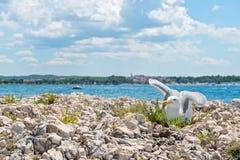 Чайка на пляже в Istria Стоковые Фото