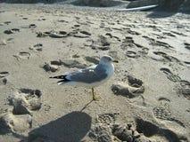 Чайка на пляже Стоковое Изображение