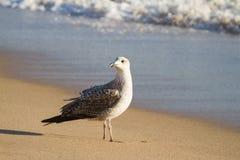 Чайка на пляже стоковое фото rf