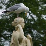 Чайка на статуе Стоковые Изображения RF