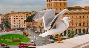 Чайка на стене национального монумента в Риме Стоковая Фотография