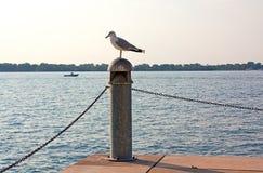 Чайка на столбце пристани Стоковые Фото