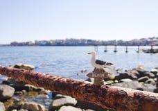 Чайка на утесе Стоковые Фото