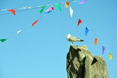 Чайка на утесе Стоковые Фотографии RF