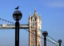 Чайка на фонарном столбе, мосте башни, Лондоне, Англии Стоковые Изображения RF