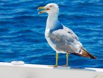 Чайка на шлюпке Стоковое фото RF