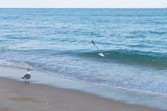 Чайка на Miami Beach Стоковое Фото