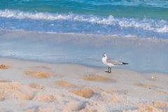 Чайка на Miami Beach Стоковые Фото
