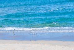 Чайка на Miami Beach Стоковые Изображения RF