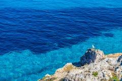 Чайка отдыхая на утесе против открытого моря на острове Favignana в Сицилии Стоковая Фотография RF