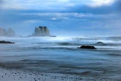 чайка пляжа bandon Стоковые Изображения RF