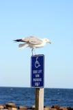 чайка посадки Стоковая Фотография