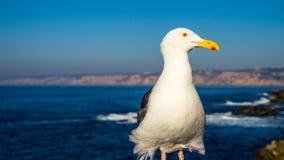 Чайка представляя в солнечном дне Стоковое Изображение
