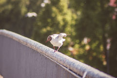 Чайка принимая  Стоковые Изображения
