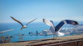 Чайка распространяя их крыло, смотря к морю перед принимать thei стоковое фото