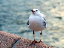 Чайка садить на насест на дамбе Стоковое фото RF