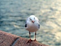 Чайка садить на насест на дамбе Стоковое Фото